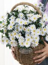 Delicate Artificial Flowers Decorations(6 Bunches)